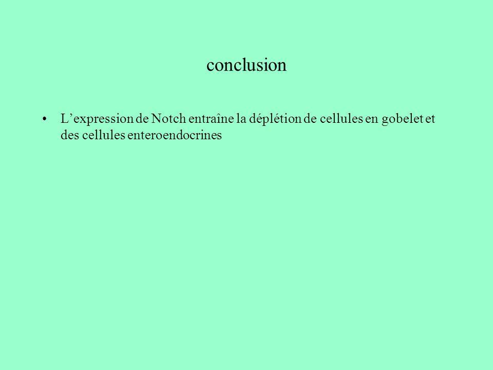 conclusions La signalisation Notch semble importante dans lintestin et particulièrement dans les cryptes.