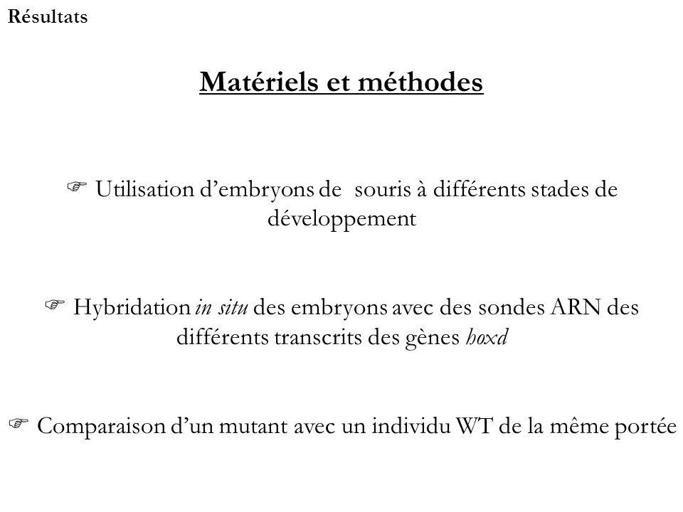 Résultats Matériels et méthodes Utilisation dembryons de souris à différents stades de développement Hybridation in situ des embryons avec des sondes