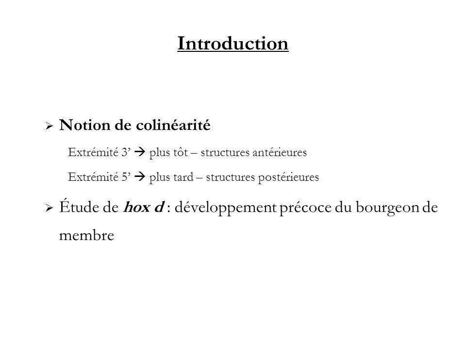 Introduction Notion de colinéarité Extrémité 3 plus tôt – structures antérieures Extrémité 5 plus tard – structures postérieures Étude de hox d : déve