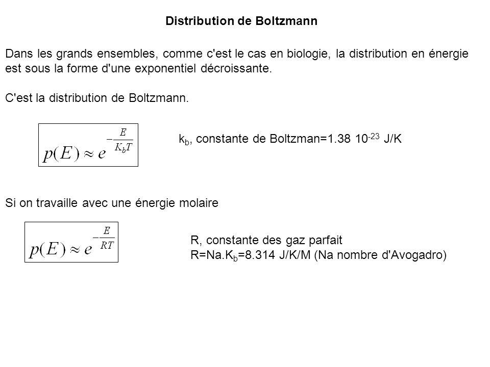 Distribution de Boltzmann Dans les grands ensembles, comme c'est le cas en biologie, la distribution en énergie est sous la forme d'une exponentiel dé