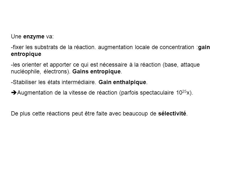 Une enzyme va: -fixer les substrats de la réaction. augmentation locale de concentration :gain entropique -les orienter et apporter ce qui est nécessa