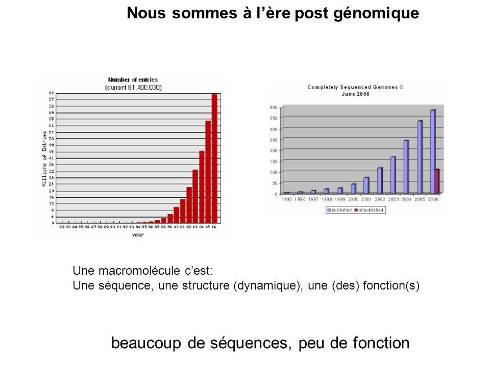 beaucoup de séquences, peu de fonction Nous sommes à lère post génomique Une macromolécule cest: Une séquence, une structure (dynamique), une (des) fo