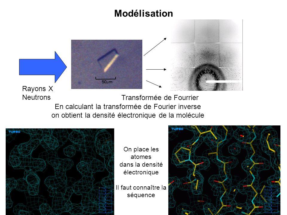 Modélisation Rayons X Neutrons Transformée de Fourrier En calculant la transformée de Fourier inverse on obtient la densité électronique de la molécul