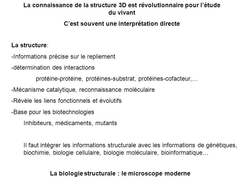 La connaissance de la structure 3D est révolutionnaire pour létude du vivant Cest souvent une interprétation directe La structure: -Informations préci