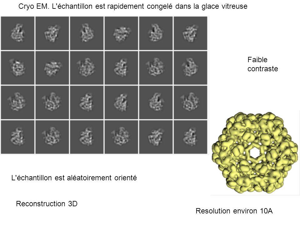 Cryo EM. L'échantillon est rapidement congelé dans la glace vitreuse Reconstruction 3D Resolution environ 10A Faible contraste L'échantillon est aléat
