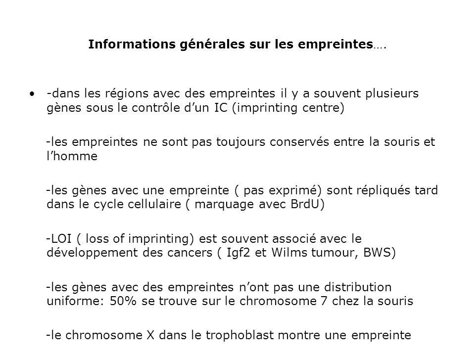 Informations générales sur les empreintes…. -dans les régions avec des empreintes il y a souvent plusieurs gènes sous le contrôle dun IC (imprinting c