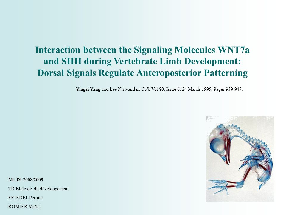 Interaction between the Signaling Molecules WNT7a and SHH during Vertebrate Limb Development: Dorsal Signals Regulate Anteroposterior Patterning Yingz