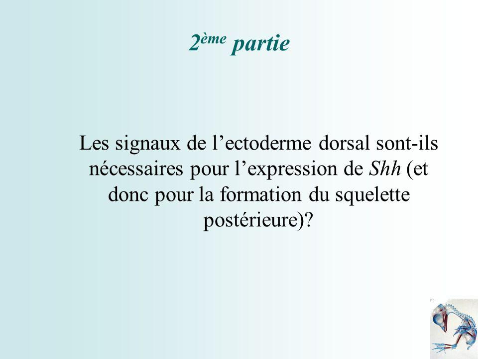 2 ème partie Les signaux de lectoderme dorsal sont-ils nécessaires pour lexpression de Shh (et donc pour la formation du squelette postérieure)?