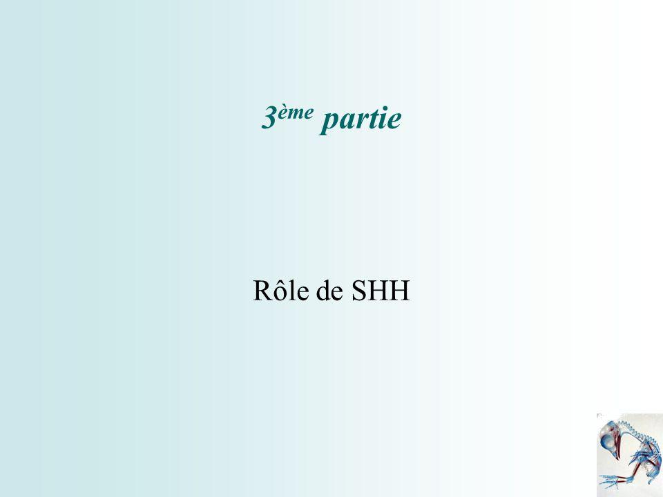 3 ème partie Rôle de SHH