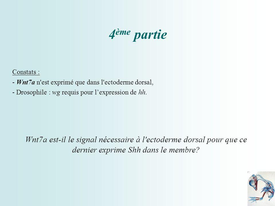 4 ème partie Constats : - Wnt7a n'est exprimé que dans l'ectoderme dorsal, - Drosophile : wg requis pour lexpression de hh. Wnt7a est-il le signal néc