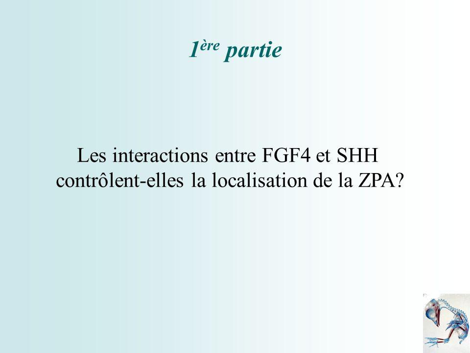 1 ère partie Les interactions entre FGF4 et SHH contrôlent-elles la localisation de la ZPA?