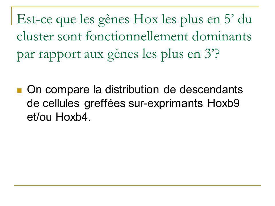 Est-ce que les gènes Hox les plus en 5 du cluster sont fonctionnellement dominants par rapport aux gènes les plus en 3.