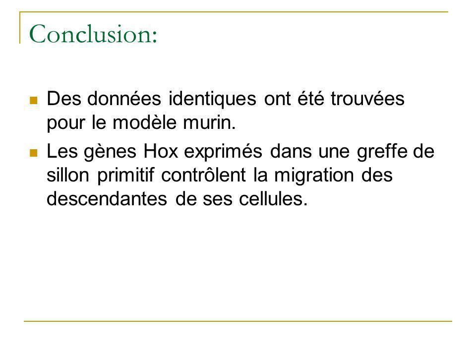 Conclusion: Des données identiques ont été trouvées pour le modèle murin.