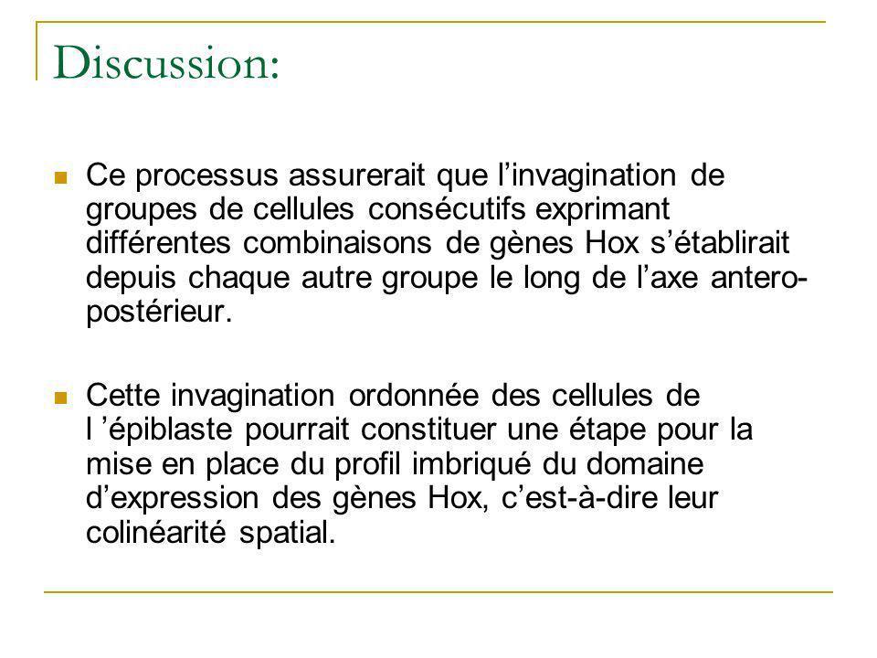 Discussion: Ce processus assurerait que linvagination de groupes de cellules consécutifs exprimant différentes combinaisons de gènes Hox sétablirait depuis chaque autre groupe le long de laxe antero- postérieur.