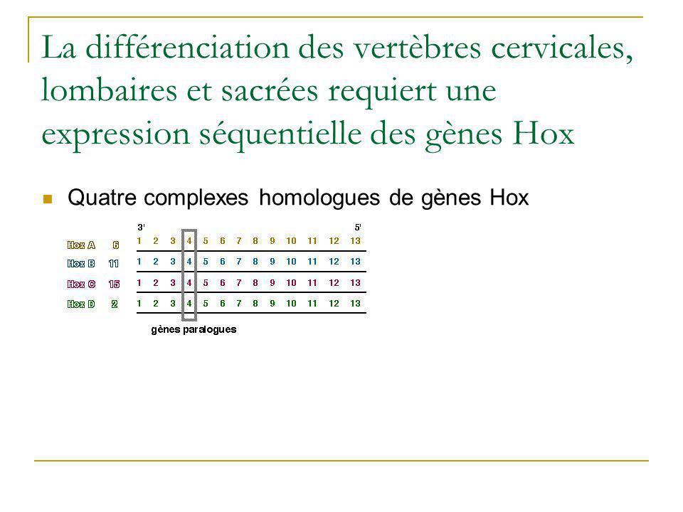 Evaluation de limpact quantitatif de lexpression dun gène Hox.