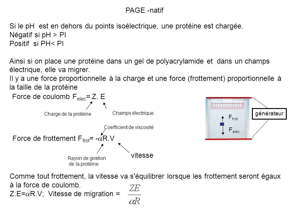 PAGE -natif Si le pH est en dehors du points isoélectrique, une protéine est chargée. Négatif si pH > PI Positif si PH< PI Ainsi si on place une proté