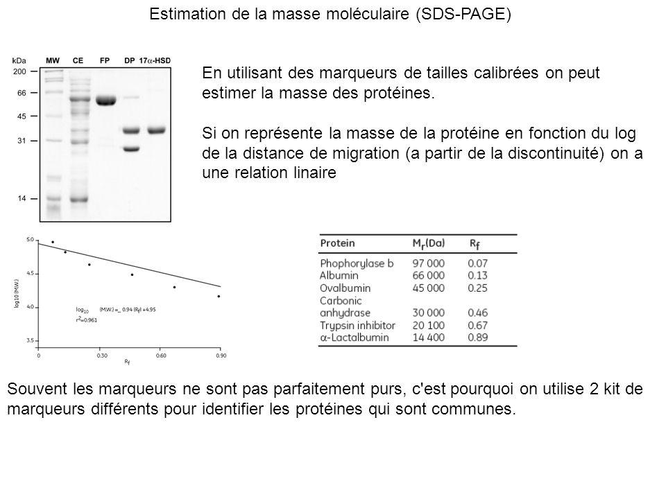 Estimation de la masse moléculaire (SDS-PAGE) En utilisant des marqueurs de tailles calibrées on peut estimer la masse des protéines. Si on représente