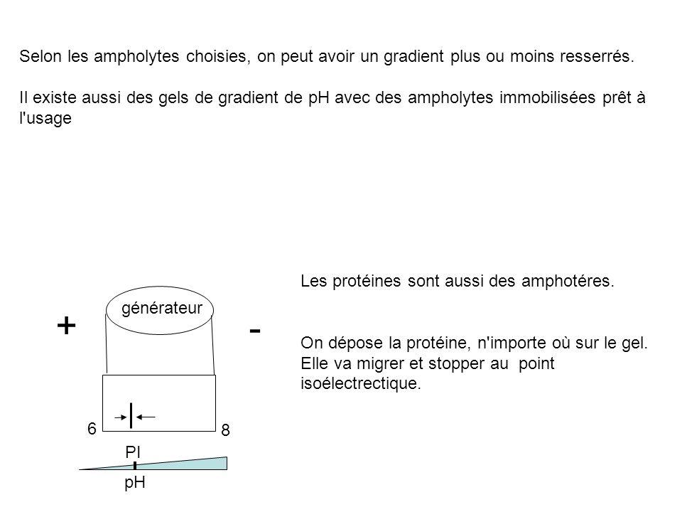 Selon les ampholytes choisies, on peut avoir un gradient plus ou moins resserrés. Il existe aussi des gels de gradient de pH avec des ampholytes immob