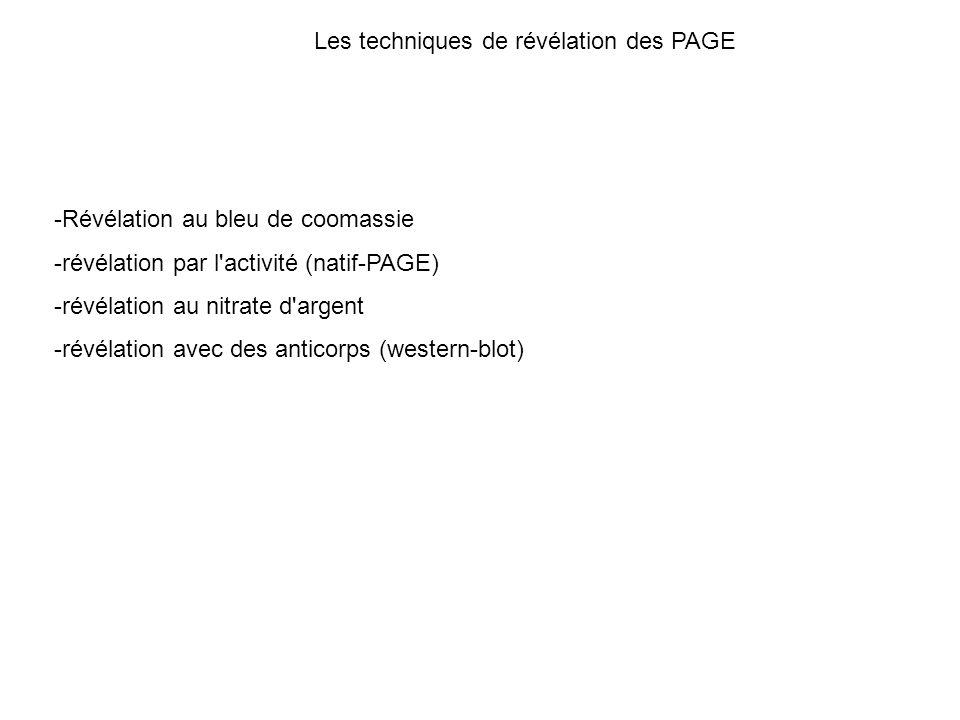 Les techniques de révélation des PAGE -Révélation au bleu de coomassie -révélation par l'activité (natif-PAGE) -révélation au nitrate d'argent -révéla