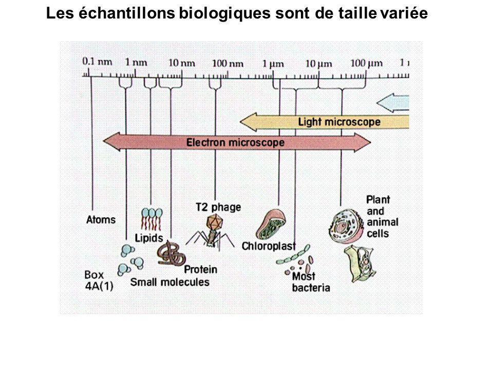 L infiniment petit 110 -3 10 -6 10 -9 10 -12 10 -15 homme fourmi cellule molécule protéine atome noyau de l atome Les outils d observation L œil microscope rayonnement synchrotron rayons X collisionneur de particules CERN Pus on veut voir petit, plus l instrument est grand