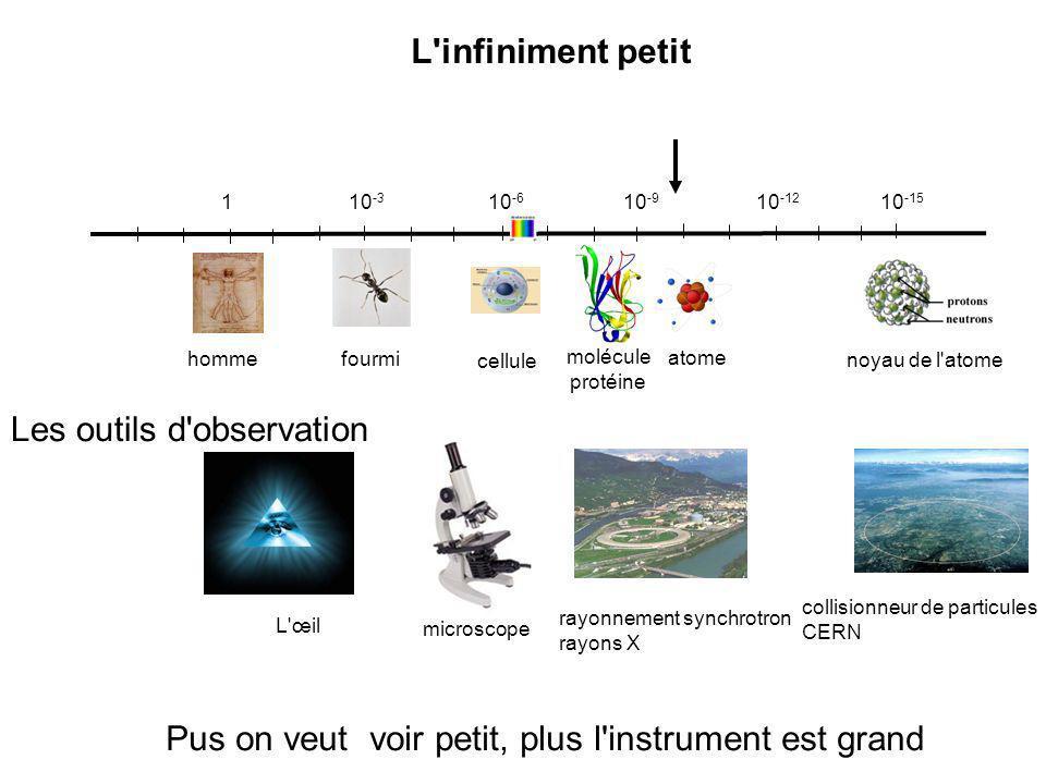 CH 3 CH2 OH CH 3 CH O + NAD + + NADH + H + L absorbation à 340 nm permet de suivre la réaction au cours du temps, cinétique enzymatique Phase préstationnaire [P] Phase stationnaire Effet du produit équilibre t Vitesse initiale