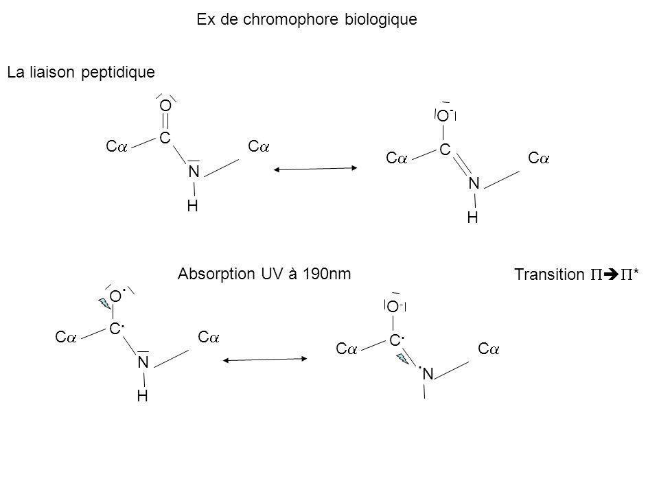 Ex de chromophore biologique La liaison peptidique C C O N C H C C O-O- N C H Absorption UV à 190nm C C.C. O.O. N C H C C.C. O-O-.N.N C Transition *