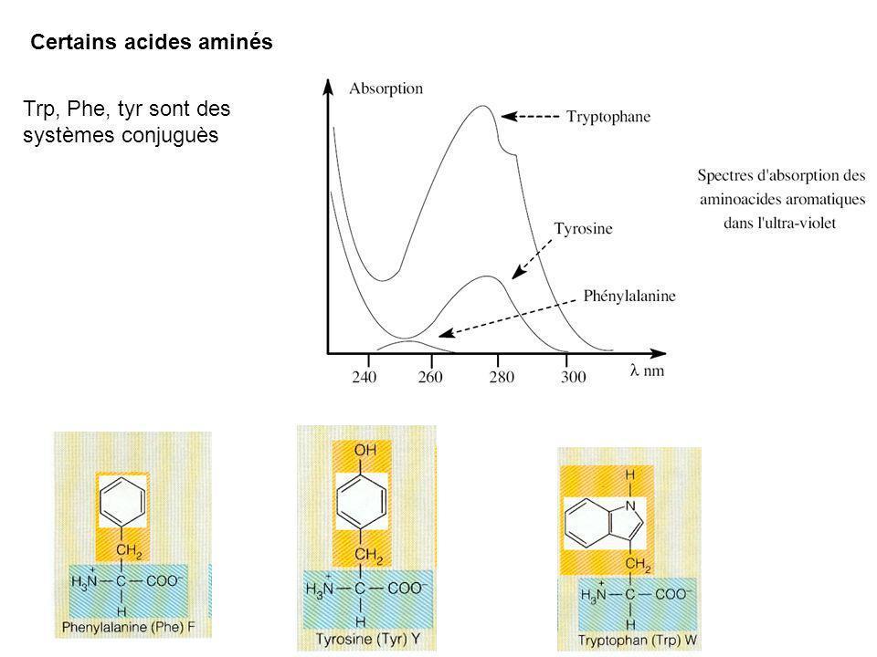 Certains acides aminés Trp, Phe, tyr sont des systèmes conjuguès