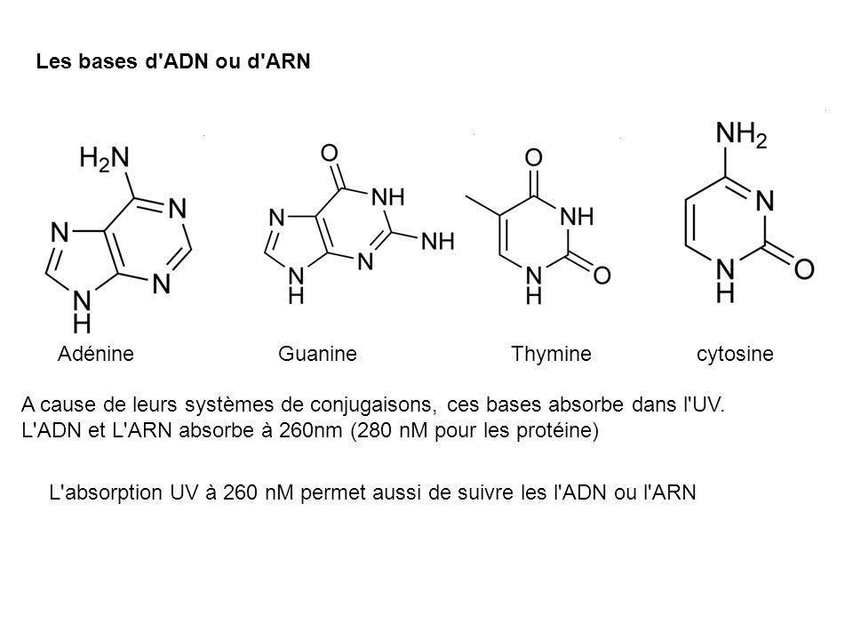 Les bases d'ADN ou d'ARN AdénineGuanineThyminecytosine A cause de leurs systèmes de conjugaisons, ces bases absorbe dans l'UV. L'ADN et L'ARN absorbe