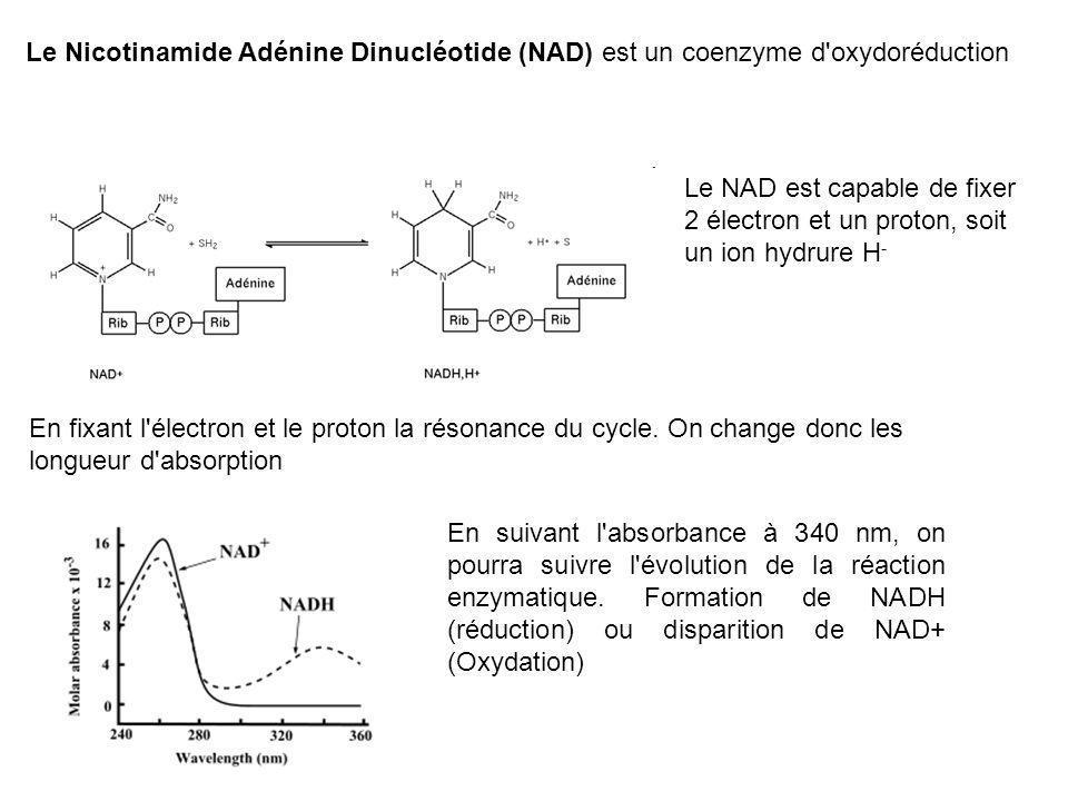 Le Nicotinamide Adénine Dinucléotide (NAD) est un coenzyme d'oxydoréduction Le NAD est capable de fixer 2 électron et un proton, soit un ion hydrure H