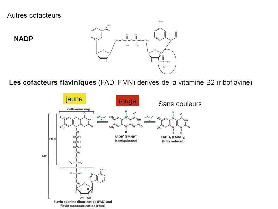 Autres cofacteurs NADP Les cofacteurs flaviniques (FAD, FMN) dérivés de la vitamine B2 (riboflavine) jaune rouge Sans couleurs