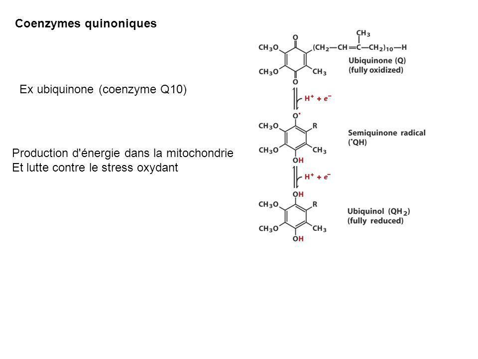 Coenzymes quinoniques Ex ubiquinone (coenzyme Q10) Production d'énergie dans la mitochondrie Et lutte contre le stress oxydant