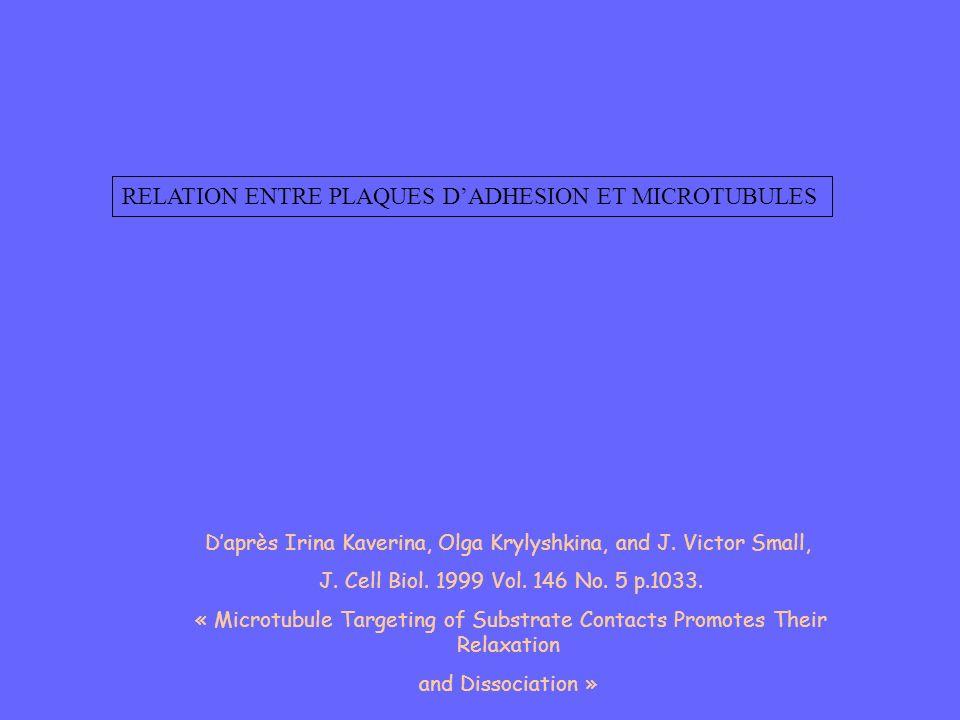 RELATION ENTRE PLAQUES DADHESION ET MICROTUBULES Daprès Irina Kaverina, Olga Krylyshkina, and J. Victor Small, J. Cell Biol. 1999 Vol. 146 No. 5 p.103