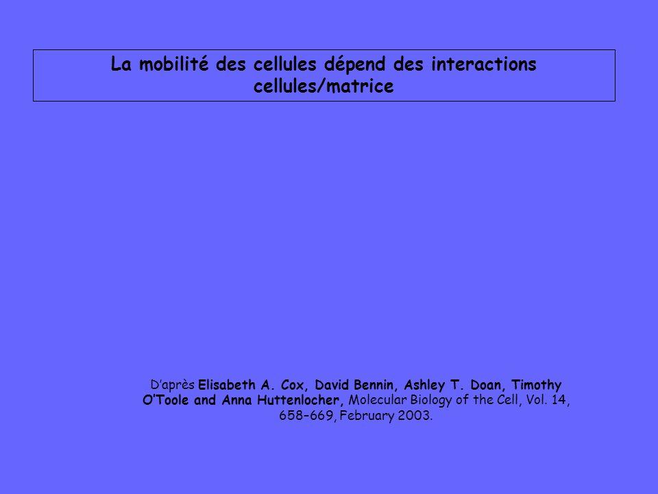 La mobilité des cellules dépend des interactions cellules/matrice Daprès Elisabeth A. Cox, David Bennin, Ashley T. Doan, Timothy OToole and Anna Hutte