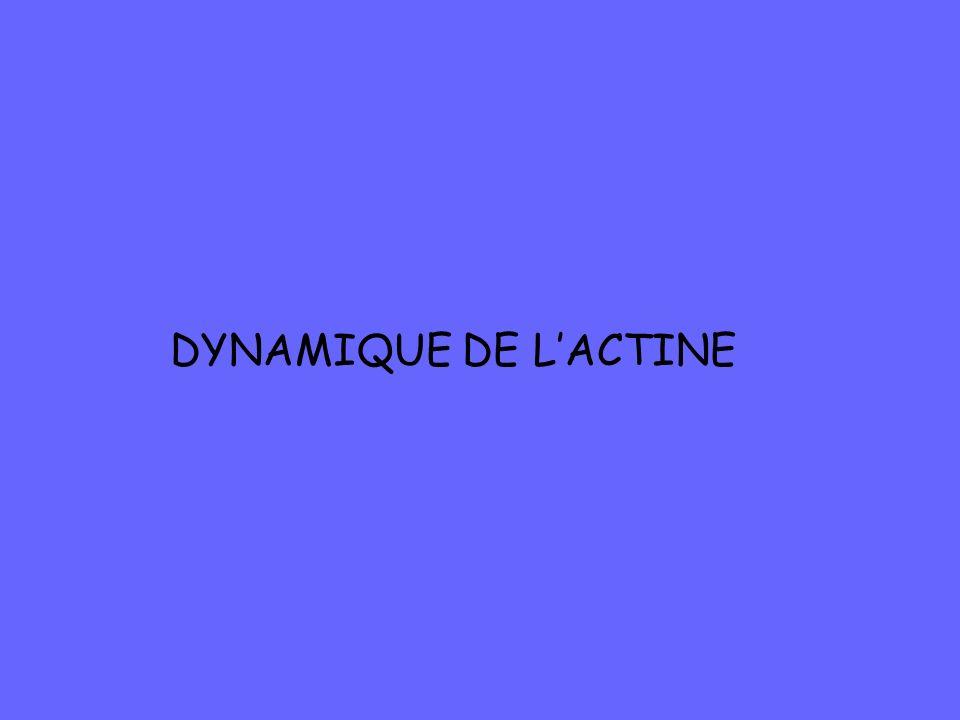 DYNAMIQUE DE LACTINE