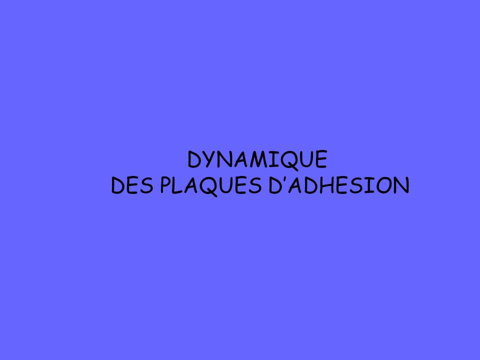 DYNAMIQUE DES PLAQUES DADHESION