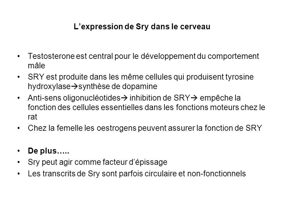Lexpression de Sry dans le cerveau Testosterone est central pour le développement du comportement mâle SRY est produite dans les même cellules qui pro