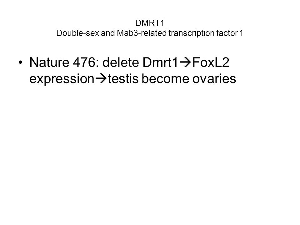 DMRT1 Double-sex and Mab3-related transcription factor 1 Nature 476: delete Dmrt1 FoxL2 expression testis become ovaries