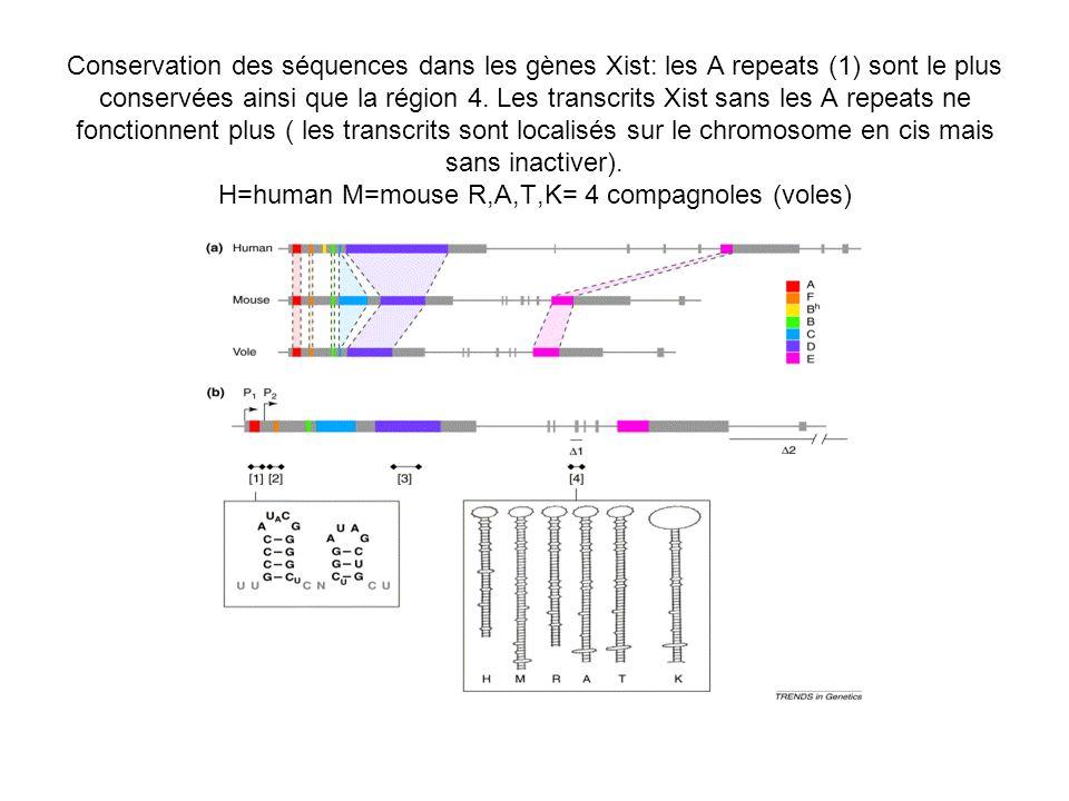 Conservation des séquences dans les gènes Xist: les A repeats (1) sont le plus conservées ainsi que la région 4. Les transcrits Xist sans les A repeat