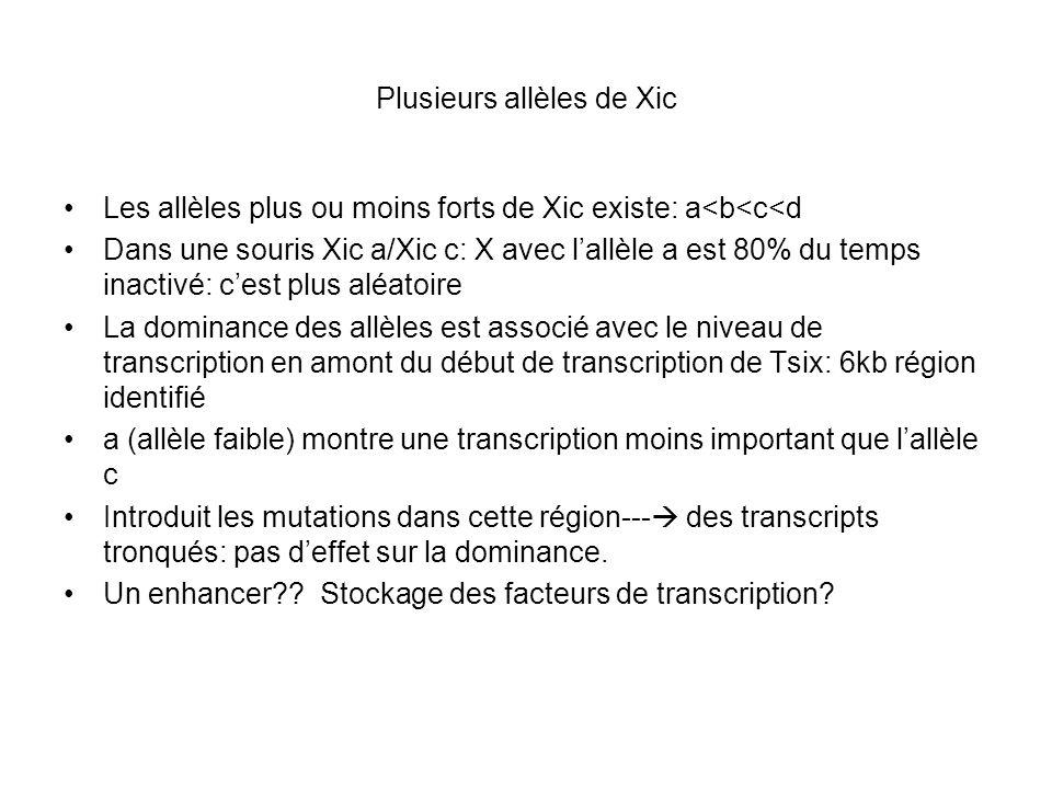 Plusieurs allèles de Xic Les allèles plus ou moins forts de Xic existe: a<b<c<d Dans une souris Xic a/Xic c: X avec lallèle a est 80% du temps inactiv