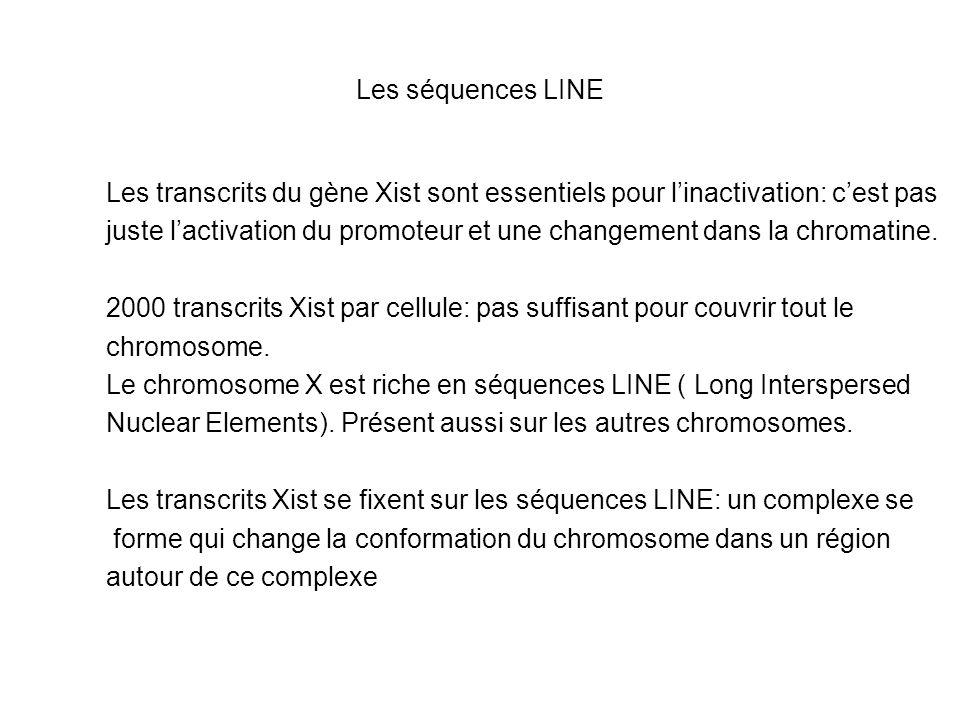 Les séquences LINE Les transcrits du gène Xist sont essentiels pour linactivation: cest pas juste lactivation du promoteur et une changement dans la c