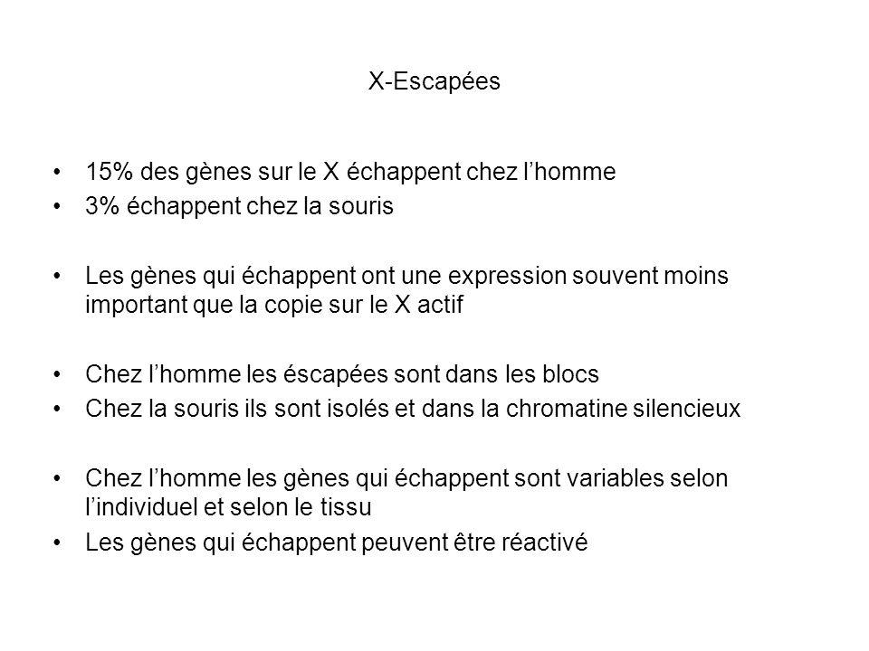 X-Escapées 15% des gènes sur le X échappent chez lhomme 3% échappent chez la souris Les gènes qui échappent ont une expression souvent moins important