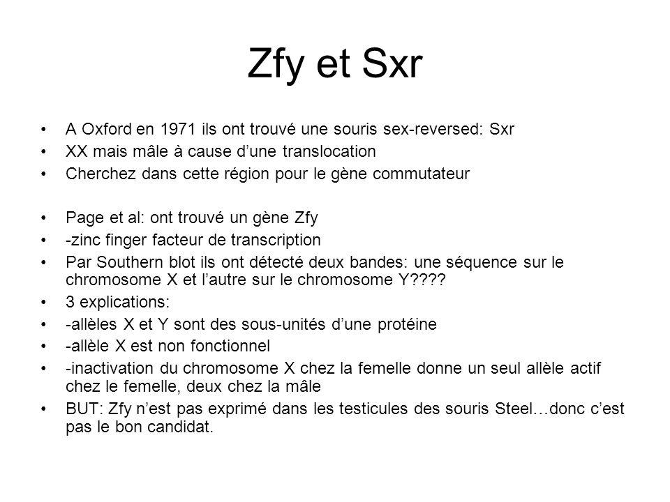Zfy et Sxr A Oxford en 1971 ils ont trouvé une souris sex-reversed: Sxr XX mais mâle à cause dune translocation Cherchez dans cette région pour le gèn