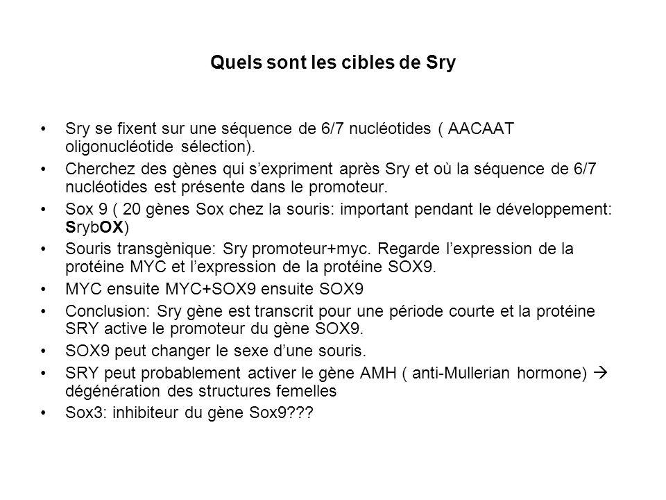 Quels sont les cibles de Sry Sry se fixent sur une séquence de 6/7 nucléotides ( AACAAT oligonucléotide sélection). Cherchez des gènes qui sexpriment