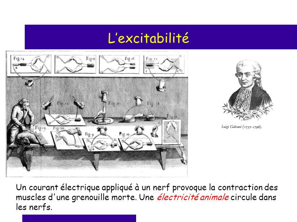 Lexcitabilité Un courant électrique appliqué à un nerf provoque la contraction des muscles d'une grenouille morte. Une électricité animale circule dan