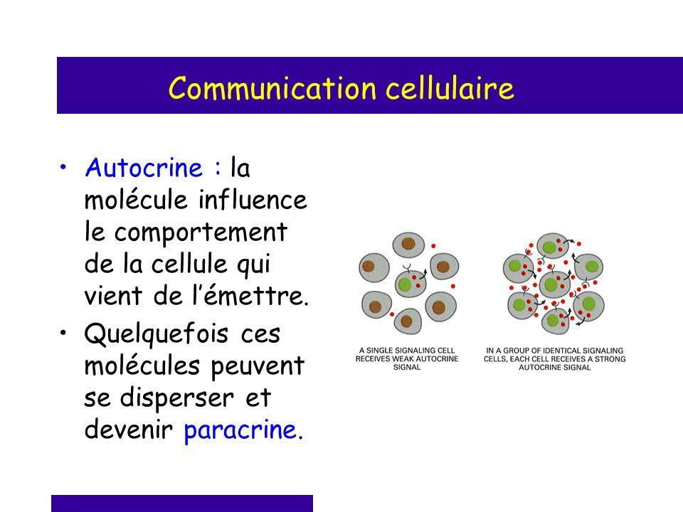 Autocrine : la molécule influence le comportement de la cellule qui vient de lémettre. Quelquefois ces molécules peuvent se disperser et devenir parac