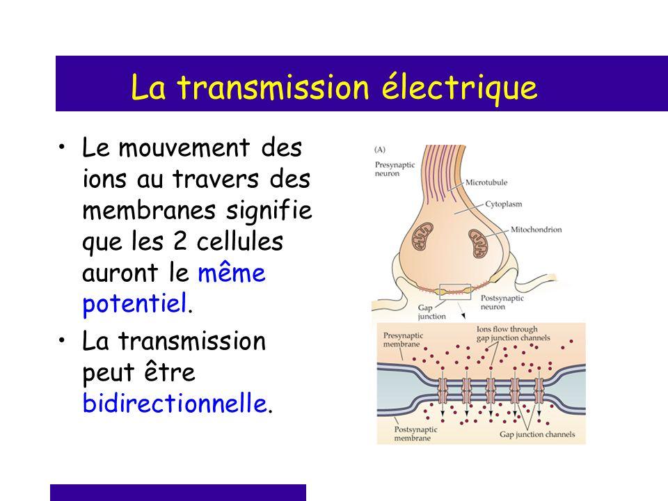 La transmission électrique Le mouvement des ions au travers des membranes signifie que les 2 cellules auront le même potentiel. La transmission peut ê