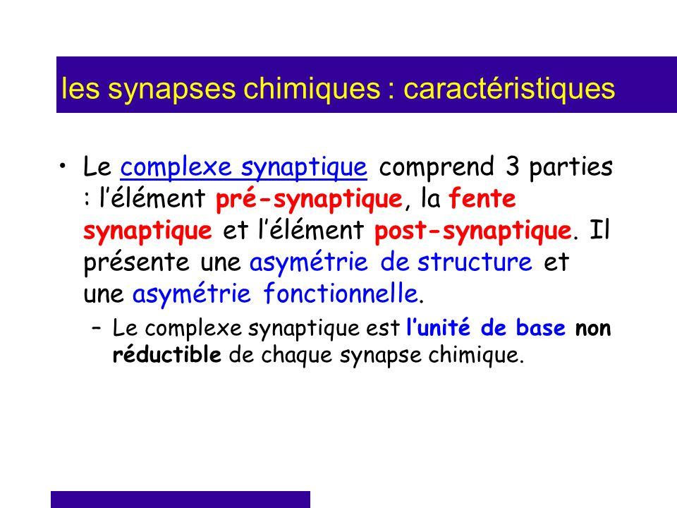 les synapses chimiques : caractéristiques Le complexe synaptique comprend 3 parties : lélément pré-synaptique, la fente synaptique et lélément post-sy