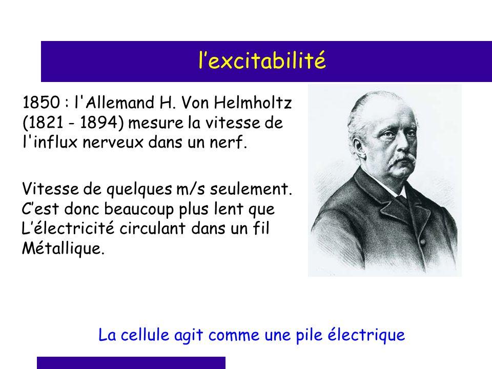 1850 : l'Allemand H. Von Helmholtz (1821 - 1894) mesure la vitesse de l'influx nerveux dans un nerf. Vitesse de quelques m/s seulement. Cest donc beau