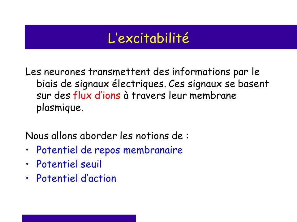 Lexcitabilité Les neurones transmettent des informations par le biais de signaux électriques. Ces signaux se basent sur des flux dions à travers leur