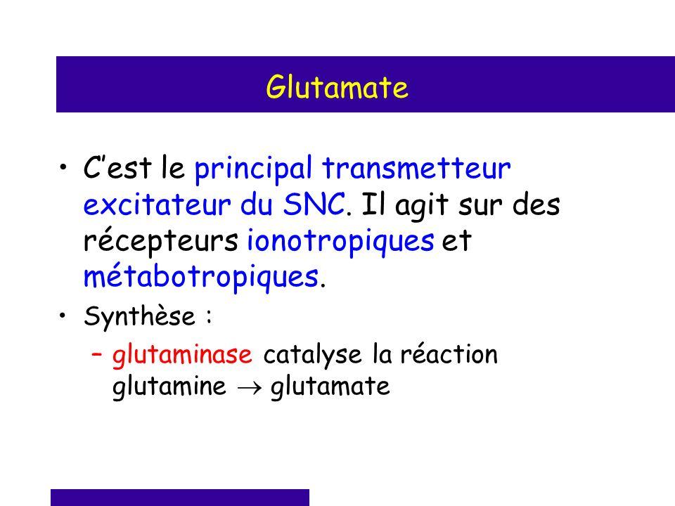 Glutamate Cest le principal transmetteur excitateur du SNC. Il agit sur des récepteurs ionotropiques et métabotropiques. Synthèse : –glutaminase catal